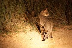 IMG_4354 (21Spicy) Tags: africa sunset elephant nature monkey wildlife lion safari rhino giraffe vulture bushwalk krugernationalpark kruger kudu africansafari wildlifephotography