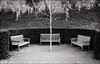 Three benches (sk31k) Tags: tree castle monochrome gardens fuji seats hedge benches xe2
