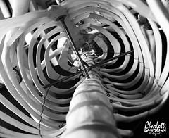 Spiral (Charlotte Lawrence Arts) Tags: white signs black anime dark skulls skeleton skull hands ribs bones ribcage bone spine rib skeletons spines ram flamable