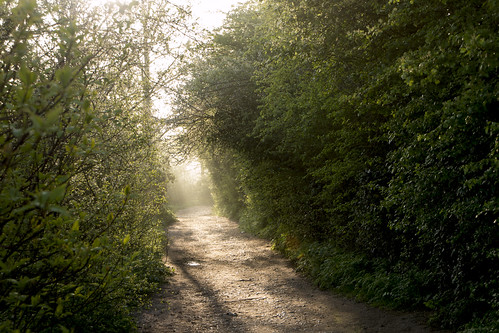 sunlit path by barryskeates, on Flickr