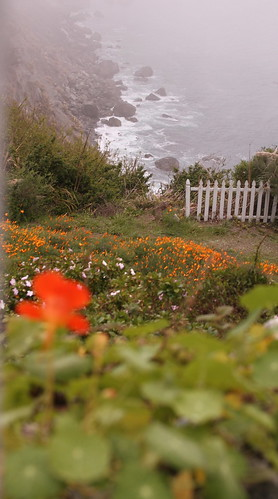 """Big Sur, CA • <a style=""""font-size:0.8em;"""" href=""""http://www.flickr.com/photos/64591330@N08/13954246179/"""" target=""""_blank"""">View on Flickr</a>"""