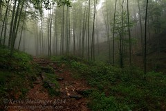 bamboo forest in fog (Kevin Messenger) Tags: china nature canon kevin wildlife reserve bamboo frog research national 7d type messenger fujian province herpetology 2014 wuyishan locality kevinmessenger