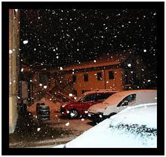 Bianchi fiochi (Ferruccio Zanone) Tags: alba neve cantina comunale dolcetto d'alba
