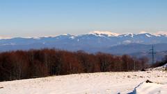 hófödte hegygerinc / snow-covered ridge (debreczeniemoke) Tags: winter snow tree ridge fa gutin hó tél maramureș máramaros canonpowershotsx20is gutinhegység munţiigutâi hegygerinc munţiigutin gutinmountains