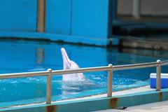 IMG_2584.jpg (Swami Stream) Tags: aquarium singapore sentosa underwaterworld canon7d