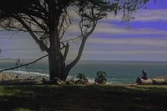 Sutro Heights (cdcontreras@sbcglobal.net) Tags: blue sky tree green girl high log nikon horizon dslr heights myview holographic sutroheights d7100
