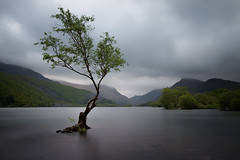 The Welsh lone tree...... (Dave Holder (Catching Up)) Tags: longexposure mountains rain wales clouds landscape moody gloomy overcast lonetree canonefs1022mm canon70d