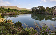 Lauragh, Co. Kerry (mcgrath.dominic) Tags: trees mountains lakes rhododendrons healypass cokerry lauragh