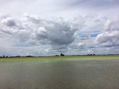Rice (Dan Brekke) Tags: california water rice farms sacramentovalley