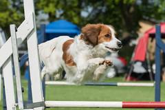 FAN_5991 (Flemming Andersen) Tags: animal outdoor hund agility dogsport hundesport dchharlev