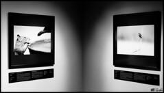 Mostra Wildlife Photographer of the year (Gi_shi) Tags: mostra bw italy nikon italia wildlife bn bard bnw biancoenero forte aosta valledaosta valdaosta fortedibard nikonitalia iamnikon d7200