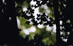 Blattwerk (Turikan) Tags: nikon f3 kodak portra 160 dortmund flora blumen und bäume nikkor f14 50mm