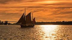 Kiel week 2016 -  Maritime impressions II (Stefan Sellmer) Tags: light sunset summer sky water germany de deutschland sailing outdoor bluesky balticsea kiel schleswigholstein kielweek thorheyerdahl kielfjord
