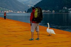 177/365 - The Floating Piers (goran1101) Tags: street people italy orange lake man bird water pier nikon candid piers seagull awesome tourist 1855 nikkor iseo lagodiseo sulzano d5100 thefloatingpiers