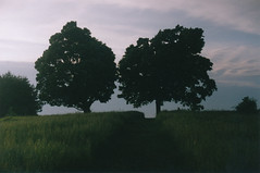 Mt. Pollux (Kelly Marciano) Tags: trees light summer sky film grass analog 35mm path adventure fujifilm dreamy analogue canona1 amherst filmgrain superia200 westernmass mtpollux colornegativefilm bluemooncamera