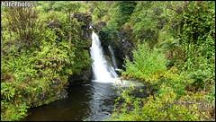 Wf 2(1) (NatePhotos) Tags: road sunset sea hawaii bay waterfall rainbow cows turtle maui hana jungle waterfalls kapalua rooster eel napili 2016 natephotos
