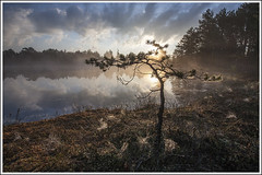 20160528. Selisoo. 6431.1 (Tiina Gill (busy)) Tags: morning tree nature fog pine backlight landscape estonia outdoor bog selisoo