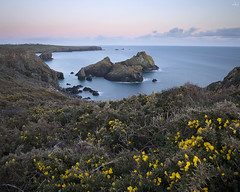 Sunset at Kynance Cove (Daphne Wong Photography) Tags: uk sea wild england sky cliff west colour nature water yellow clouds landscape photography coast seaside long exposure cornwall cove wildlife south calm lizard shore nd peninsula density gorse neutral kynance