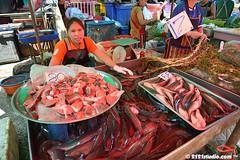 Cat Fish Business
