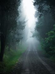 the way to sprenna (T N K) Tags: tuscany morning fog mist trees green italy crete senesi siena light road path