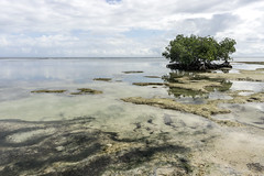 mangrove (bilderkombinat berlin) Tags: sea seascape reflection tree beach water clouds daylight mar day horizon naturallight playa mangrove republicadominicana lasterrenas caribe elportillo saman 2016