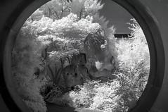 DSC_3761s (An Xiao) Tags: arboretum bonsai penjing