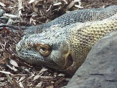 DSCF0167 (Stonehenge 68) Tags: zoo birmingham snake alabama lizard plantation antebellum birminghamzoo arlingtonhouse