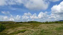 a Rozsály / the Igniş (debreczeniemoke) Tags: blue sky cloud landscape spring day perspective ég felhő tavasz bilberry tájkép kék kilátás feketeáfonya rozsály canonpowershotsx20is igniş pwpartlycloudy