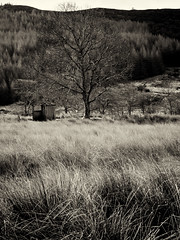 """Old shed and tree, near Strontian • <a style=""""font-size:0.8em;"""" href=""""http://www.flickr.com/photos/26440756@N06/8723451562/"""" target=""""_blank"""">View on Flickr</a>"""