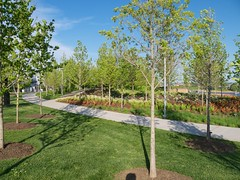 Smale Riverfront Park (taestell) Tags: park trees ohio downtown cincinnati urbanforest riverfrontpark smaleriverfrontpark