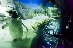 (MagdaBis) Tags: people animal japan aquarium arctic osaka spectators kansai pinguine