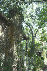 Hidden Among the Tree Canopy (kellymariemckay) Tags: house abandoned stone oak fireplace florida decay sarasota exploration residential