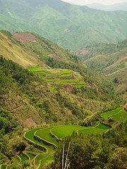 Rice terraces on the way to Loccong village