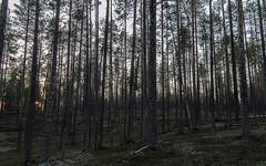 Hossa (Juho Holmi) Tags: hossa suomi finland suomussalmi retkeilyalue autiotupa hiking area kainuu eastern north ostrobothnia metsähallitus nature visitfinland summer green scenery finnland finlandia pentax k5 k 5 sigma af 1770mm f2845 dc macro 17 70 28 45 thisisfinland kansallispuisto kansallis puisto national park