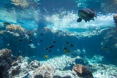 -Okinawa Japan (J.D Chen ) Tags: trip travel blue sea vacation japan island nikon tour  nippon okinawa backpacker f28  d800  1424  nikonnanocrystalcoat
