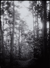(NooFZz) Tags: bw landscape 9x12 photographicpaper aplanat bulldog4x5