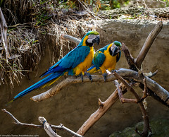 Friendship (Documentary & Travel Photography) Tags: park love beauty animals santabarbara zoo coast highway riviera pacific colonial conservation tourist romance passion mission care