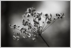 Nature:TNG