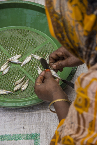 A woman cleans Mola to be cooked for her family in Rangpur, Bangladesh. Photo by Holly Holmes, 2013