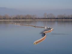 PC310017 (john blopus) Tags: lake hellas greece serres kerkini ελλάδα λίμνη κερκίνη σέρρεσ