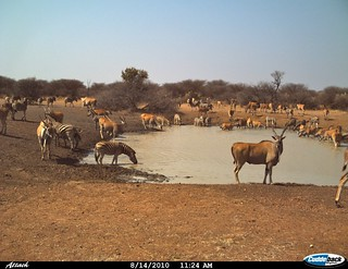 Namibia Safari - Lake Lodge 19