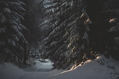 So! Snow (Weisimel) Tags: wood november autumn winter light sun sunlight snow cold tree forest frozen nikon stream dof path walk branches grain traces faded footsteps d800 nikonafs85f14g