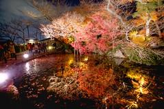 IMG_5305 (Thomo13) Tags: autumn red colour reflection fall leaves yellow japan night canon temple eos pond kyoto mark ii 5d kiyomizu koyo momoji ringexcellence