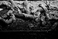 حطام .. النهاية ~ Wreckage .. THE end * (Mashael88) Tags: mesh theend end ahmed wreckage ~ و the احمد تصوير سياره اشياء اسود شجر مجموعة قديمة مزرعه خوف ابيض نهايه النهاية فوتوغرافي عظام حطام مشاعل mashael ميش فوتوغرافية فوتوغرفي uploaded:by=flickrmobile flickriosapp:filter=nofilter