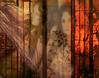 ~~~temptation~~ (xandram) Tags: trees rain collage photoshop three photo women curtain screen textures temptation
