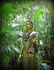 ~11-21-11/Oahu Trip #4~ (TravelsThruTheUniverse) Tags: tropicalplants exoticgardens wow1 zengardens tropicalgardens tropicalfoliage subtropicalgardens tropicallandscapes subtropicallandscapes