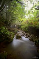 Hidden paradise...! (AdithetoS) Tags: wood autumn trees color nature water fog river nikon rocks forrest stones hellas greece nikkor mystic gettyimages lamia d800 2470mmf28 fthiotida stereaellada nikond800 adithetos