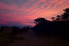 Sunrise,Sandakphu, Darjeeling, West bengal, India (Sougata2013) Tags: morning trees sky cloud india nature sunrise nikon gorgeous himalaya bengal darjeeling bangla westbengal morningview sandakphu nikond3200 kanchenjunga himalayanrange sonarbangla kanchenjungarange