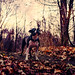 Boston Terrier Surveying Her Kingdom