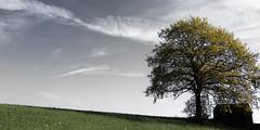 Ténébreux Printemps (Lux Obscura) Tags: tree nature arbre clair printemps obscur partielle ténébreux désaturation